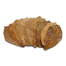 Лист индийского миндаля, кетапанг 1 шт